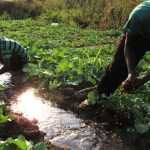 west-farmers-trained-in-drip-irrigation